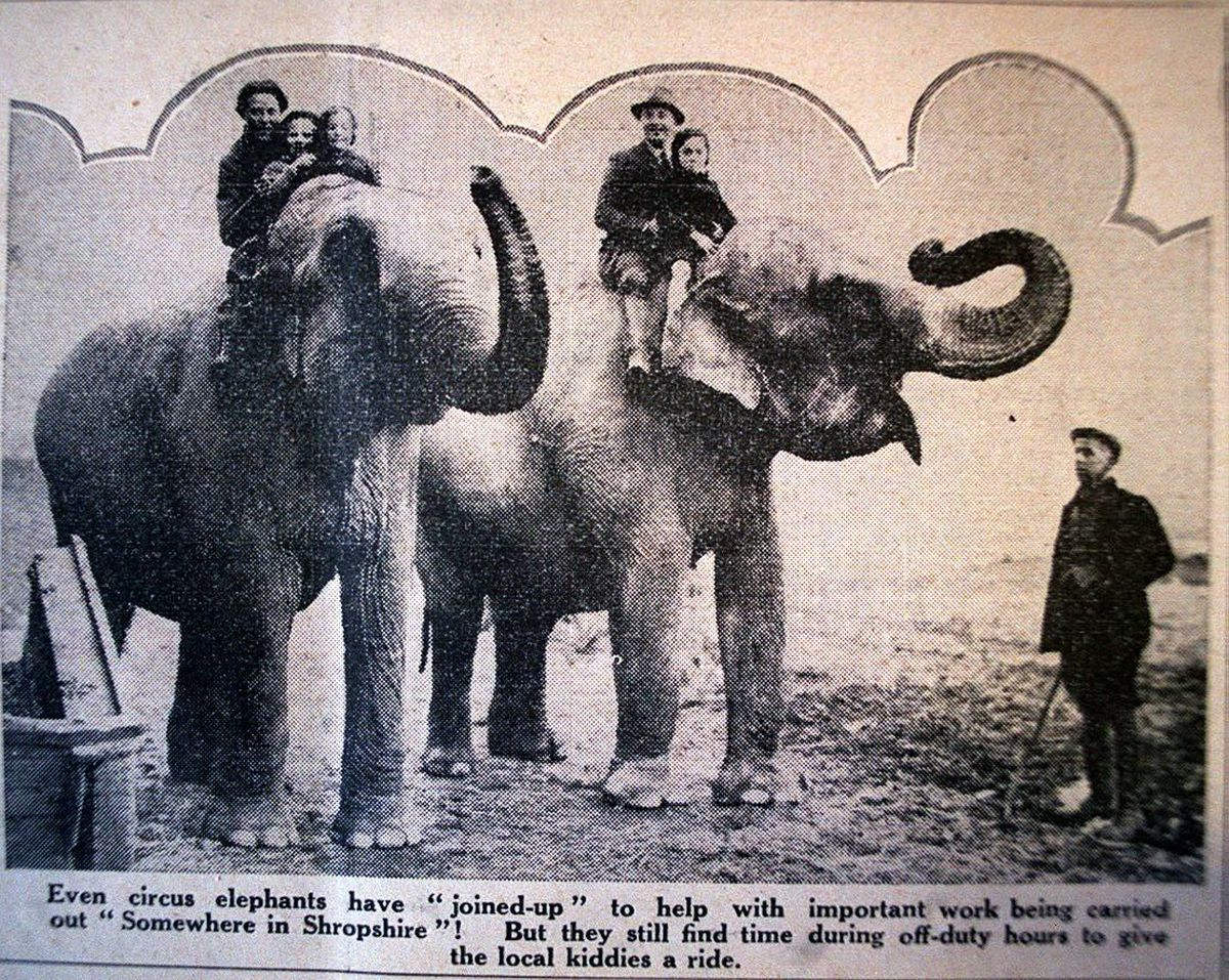 A cutting from a contemporary newspaper telling how circus elephants Saucy and Salt were recruited to clear the way for Bratton airfield near Wellington - although due to censorship the location was not given.