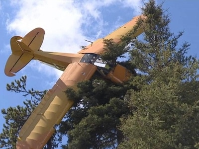 Pilot rescued after plane 'lands' on top of 60ft tree