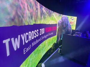 A high-tech festival-style stage has been created for the livestream to raise cash for Twycross Zoo