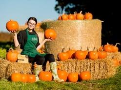 Pick up a pumpkin at Shrewsbury's Battlefield 1403