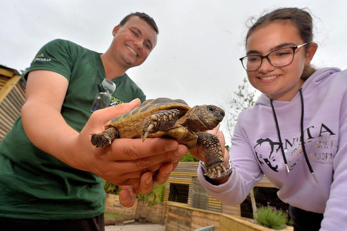 Liam Hayward shows Natasha Parker a tortoise