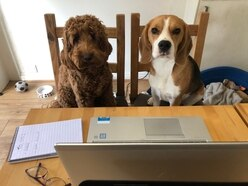 GALLERY: Pets across the Midlands hard at work from home amid coronavirus outbreak