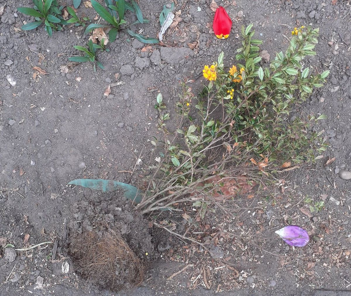 The vandalised flowers