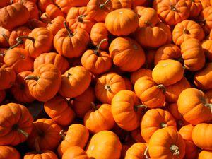 Little Wytheford Farm preparing for pumpkin pickers