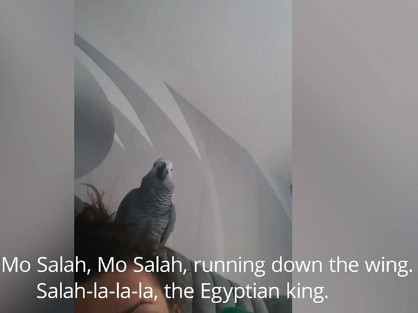 Parrot sings about Champions League-winning Liverpool forward Mo Salah
