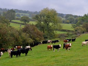 SOUTH SHROPSHIRE STAR STEVE LEATH COPYRIGHT EXPRESS AND STAR 08/10/2014  Pic in fields around Caynham near Ludlow, where they are proposing to build a solar farm.  Not the fields with the cattle but the two above are proposed sites..
