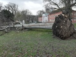 Trees down and roads warnings as Storm Eleanor hits Shropshire and Mid Wales - with pictures