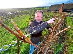 What it's like to run a vineyard: Halfpenny Green Wine Estate