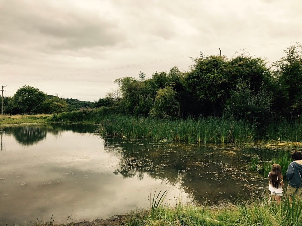 """""""Real gem"""" at Beeches Field in Ironbridge named a Local Nature Reserve"""