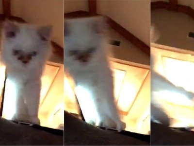 Watch this kitten do its best impression of Del Boy falling through the bar