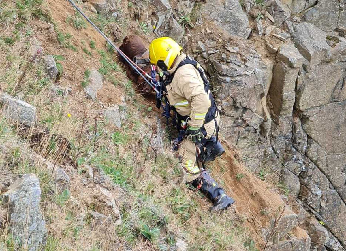 Chester is retrieved from the cliff side. Photo: Shropshire Fire and Rescue Service
