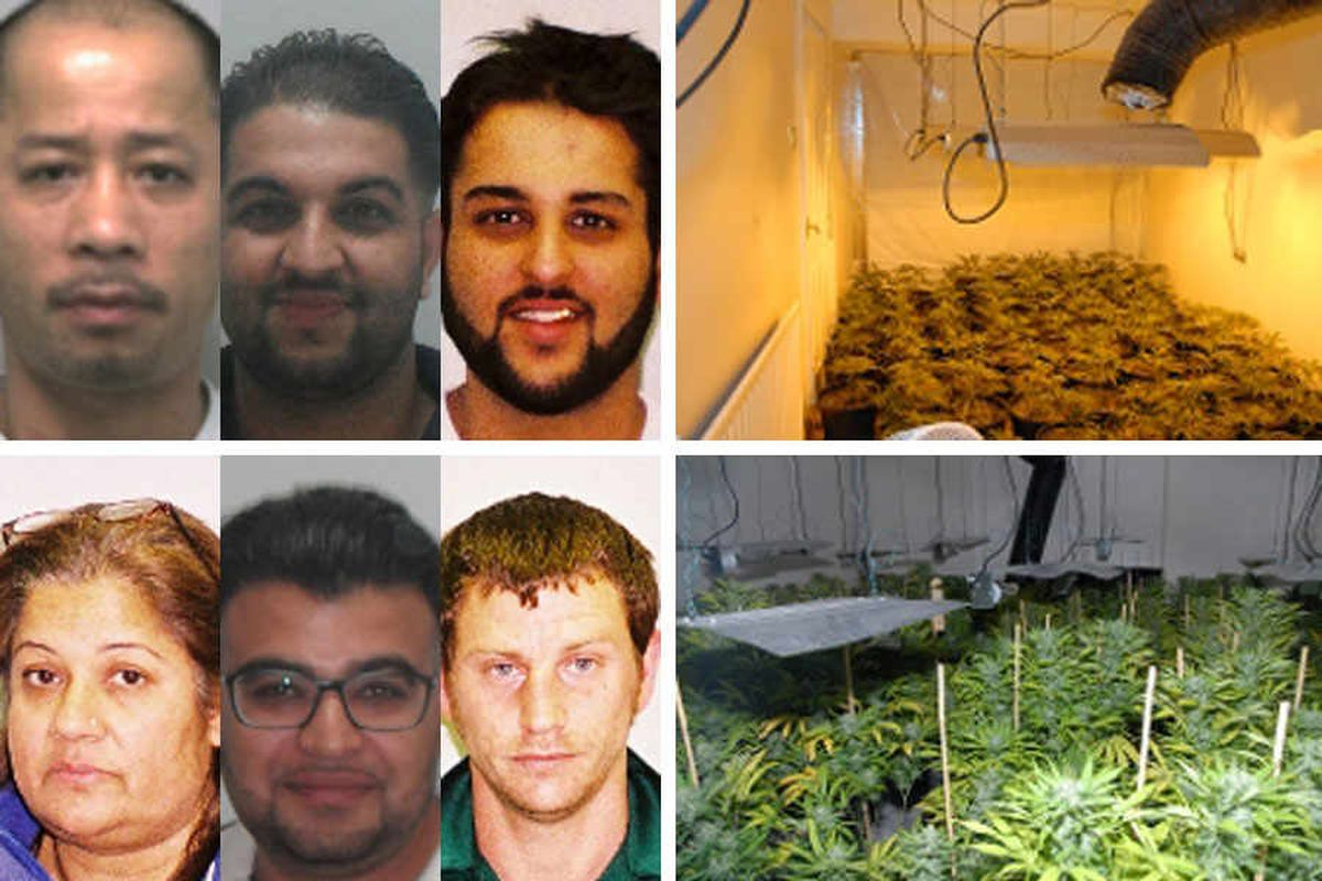 Drugs ring sentenced to over 30 years in jail for £3 million Telford cannabis operation