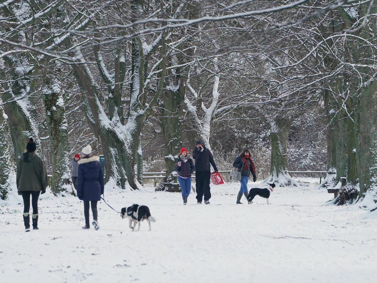 People walk through a snow-covered wood in Hexham, Northumberland