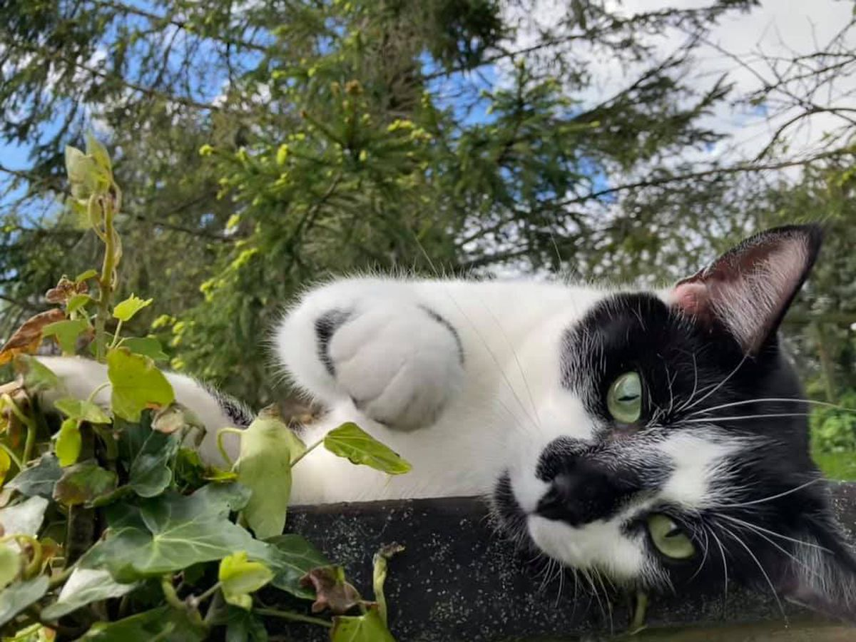 Tenants should be able to have pets the RSPCA says