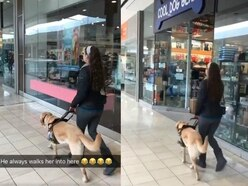 Watch: This guide dog sneakily led his owner into a shop called Cool Dog Gear