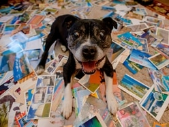 Shropshire pooch Max is face of postcard world record campaign