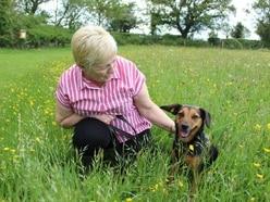 Shrewsbury rescue dogs in mini-films series